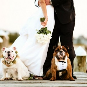 pet-in-wedding